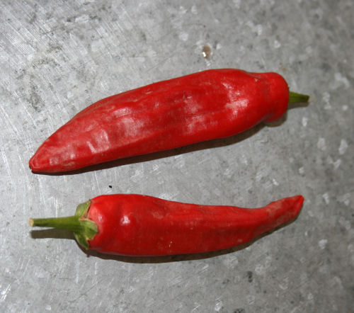 July - red chillies