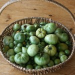 Sept green toms
